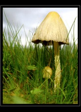 Fungi Photo Art for Sale by Artist C Ribet 02