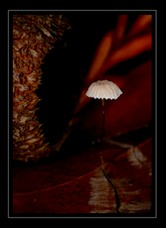 Fungi Photo Art for Sale by Artist C Ribet 03