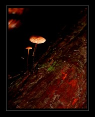 Fungi Photo Art for Sale by Artist C Ribet 11