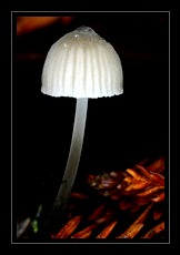 Fungi Photo Art for Sale by Artist C Ribet 17
