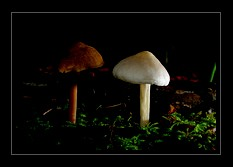 Fungi Photo Art for Sale by Artist C Ribet 06