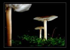 Fungi Photo Art for Sale by Artist C Ribet 09