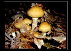 Fungi Photo Art for Sale by Artist C Ribet 13