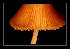 Fungi Photo Art for Sale by Artist C Ribet 05