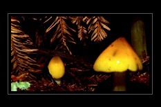 Fungi Photo Art for Sale by Artist C Ribet 16